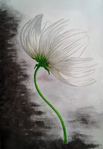 Flor de un día (J. Pedro Gómez)